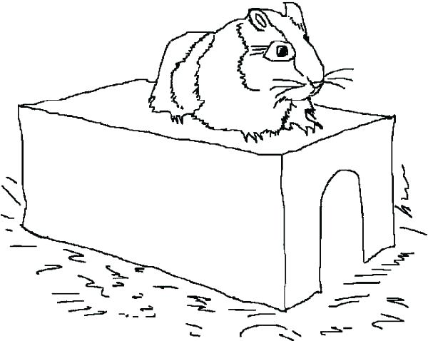 600x478 Guinea Pig Coloring Pages 48 And Miss Piggy Coloring Pages