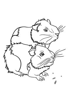 236x305 Top 25 Free Printable Guinea Pig Coloring Pages Online Cavy, Pig