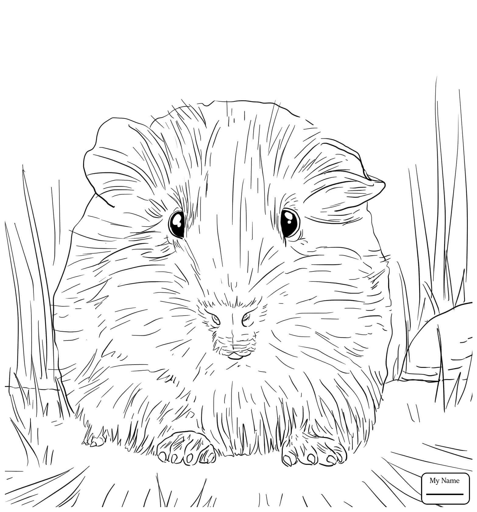 1567x1681 Coloring Pages Cute Guinea Pig Portrait Guinea Pig Mammals