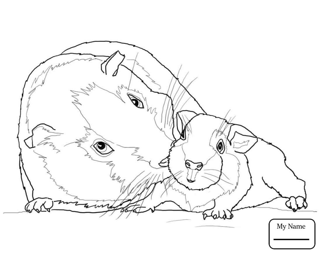 Cute Guinea Pig Drawing at GetDrawings.com | Free for personal use ...