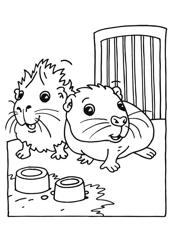595x842 Print Coloring Image Pig Stuff, Pocket Pet And Cavy