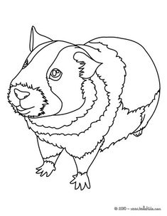 235x304 Draw A Guinea Pig Drawings, Animal And Cavy