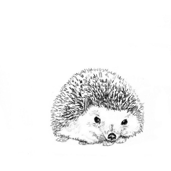 600x600 Pin By 15 On Polyvore Hedgehogs And Polyvore