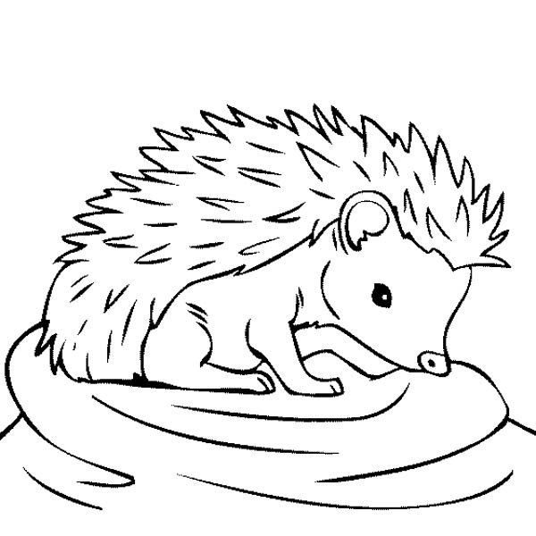 600x600 Coloring Pages Hedgehog