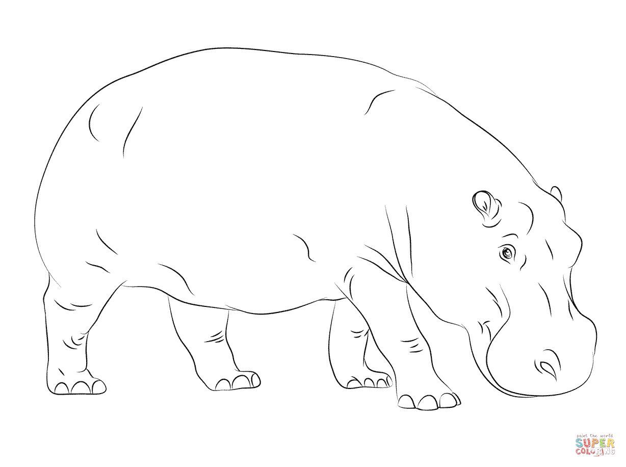 1228x916 Baby Hippo Coloring Pages Page For Kids Of Cute Hippos Online High
