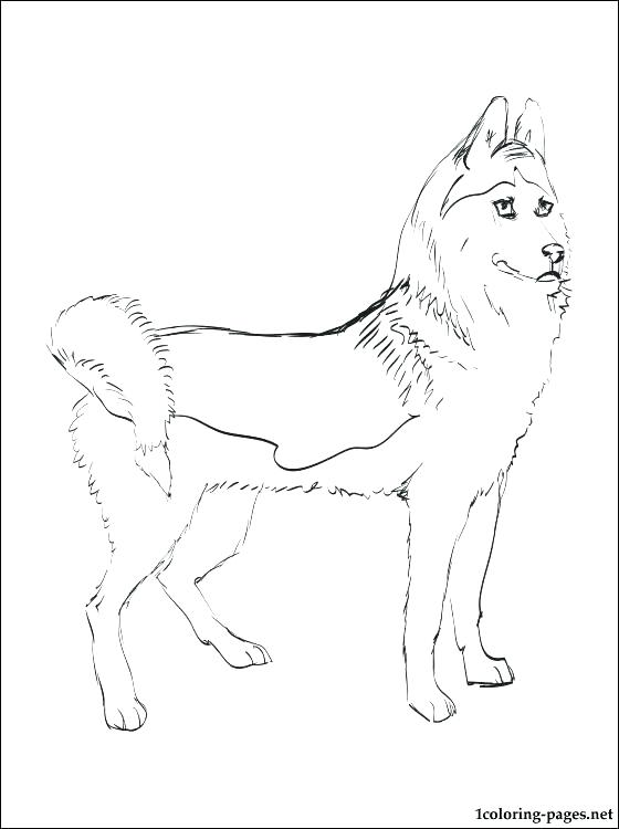 The best free Husky drawing images. Download from 693 free ...