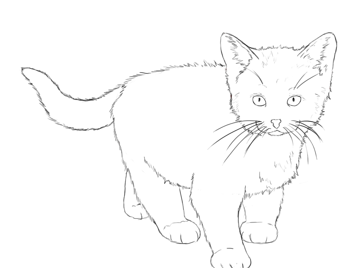 1200x900 How To Draw A Kitten Tutorials, Cat And Sketches
