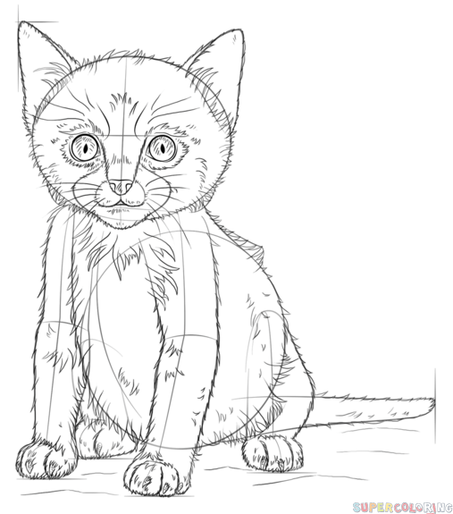 507x575 How To Draw A Cute Kitten Step By Step Drawing Tutorials