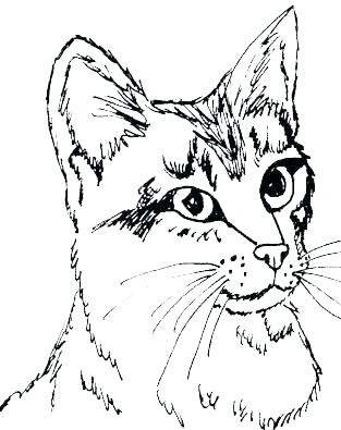 313x395 Kitten Coloring Pages Cute Kitten Coloring Pages Printable To Good