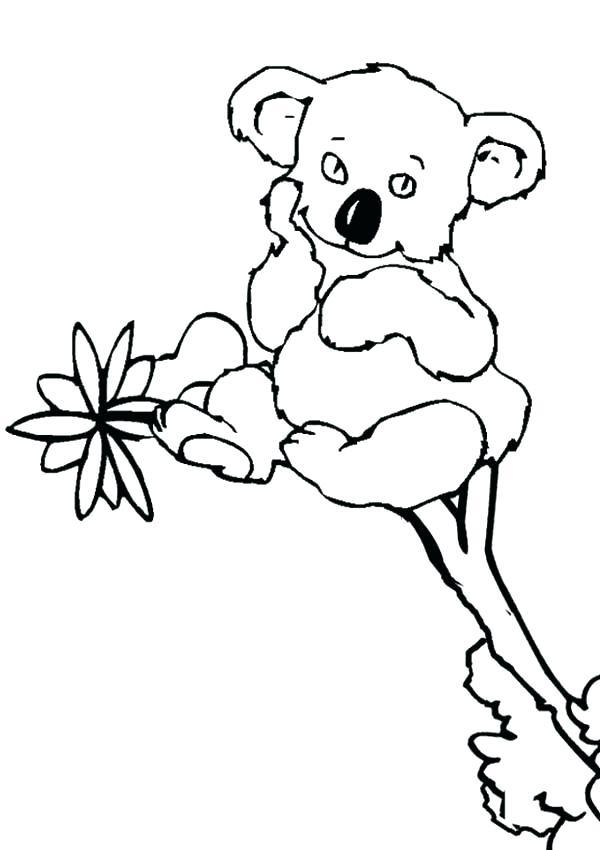 600x850 Koala Coloring Pages Cute Koala Coloring Pages Realistic Koala