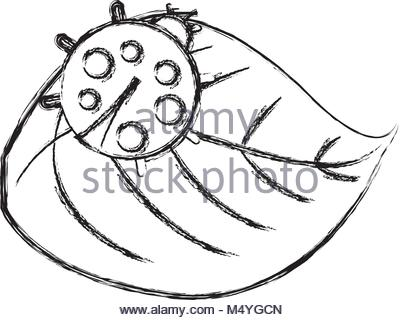 400x320 Cute Ladybug In Leaf Natural Wildlife Animal Stock Vector Art