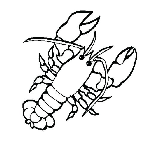 505x470 Lobster Coloring Page Lobster Coloring Page Red Lobster Coloring