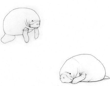Cute Manatee Drawing