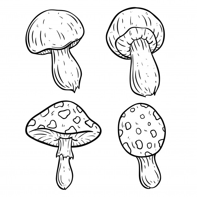 626x626 Set Of Cute Mushroom With Using Doodle Art Vector Premium Download