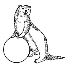 Cute Otter Drawing