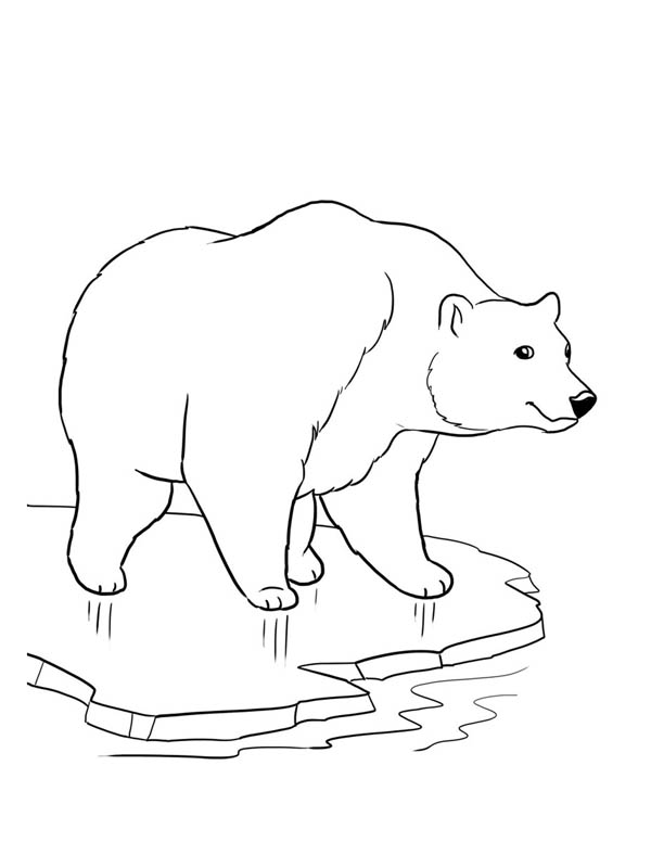Cute polar bear drawing at free for for Polar bear coloring page