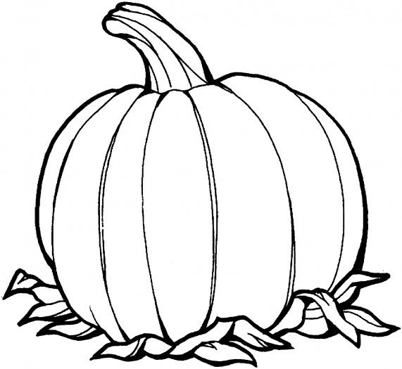 571x525 Pumpkin Outline Drawing Clipart Panda