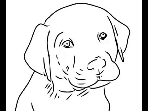 480x360 How to Draw Cute labrador puppy