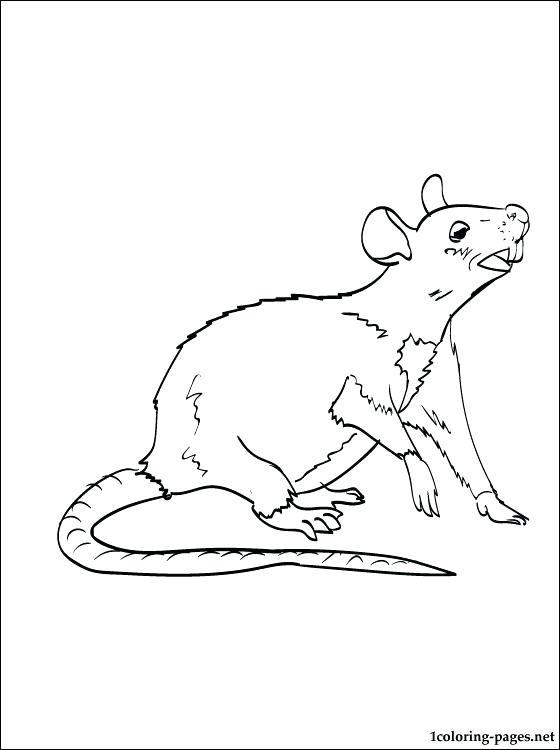560x750 Rat Coloring Page Rat Coloring Page To Print Out Cute Rat Coloring