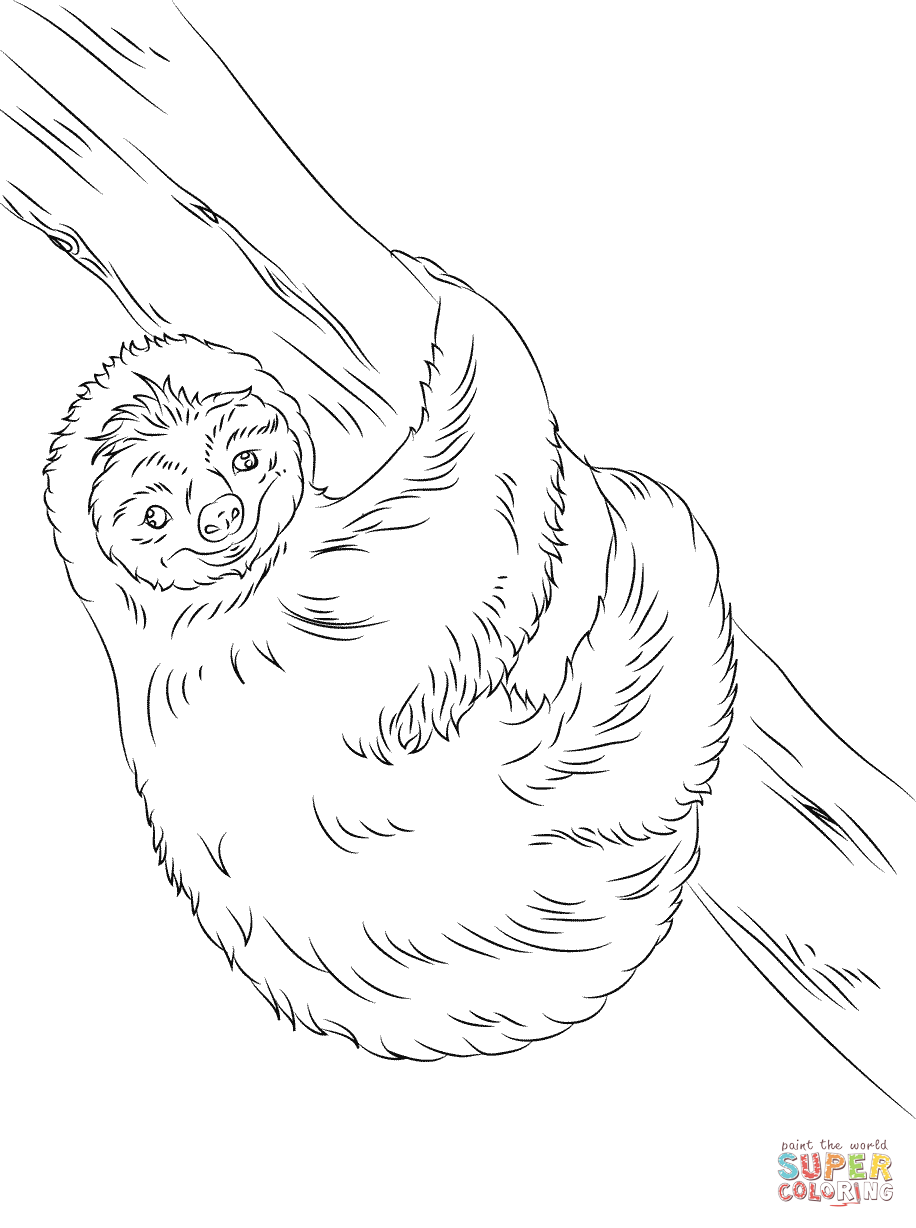 916x1228 Cute Sloth Coloring Page Free Printable Coloring Pages