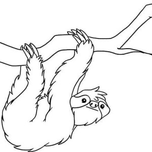 300x300 Realistic Drawing Of Sloth Coloring Page Color Luna Sloths