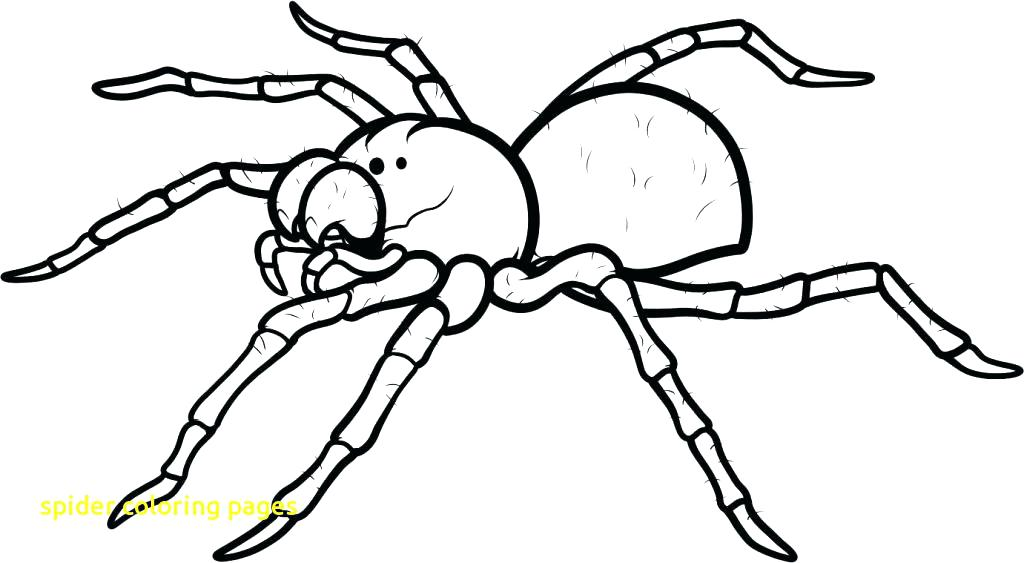 1024x563 Spider Coloring Page Funny Spider Coloring Page Printable Spider