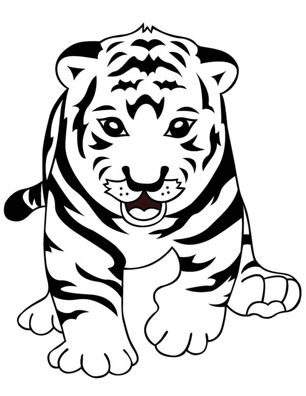600x776 A Cute Tiger Cub Learn To Walk Properly Coloring Page