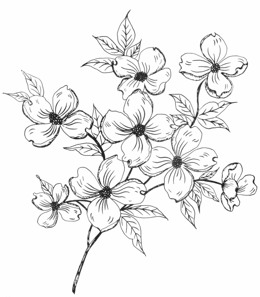 896x1024 Flower Tree Drawing Pine And Spruce Sketches Cute As Gift Tags