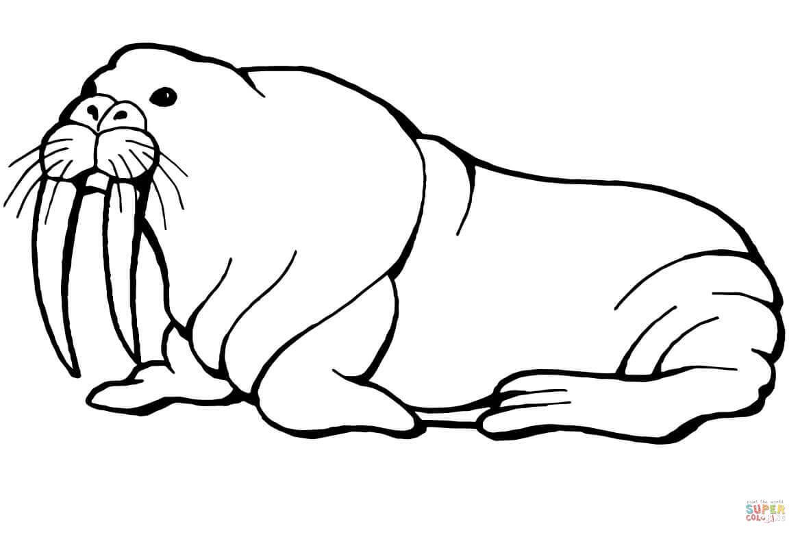 Cute Walrus Drawing at GetDrawings   Free download