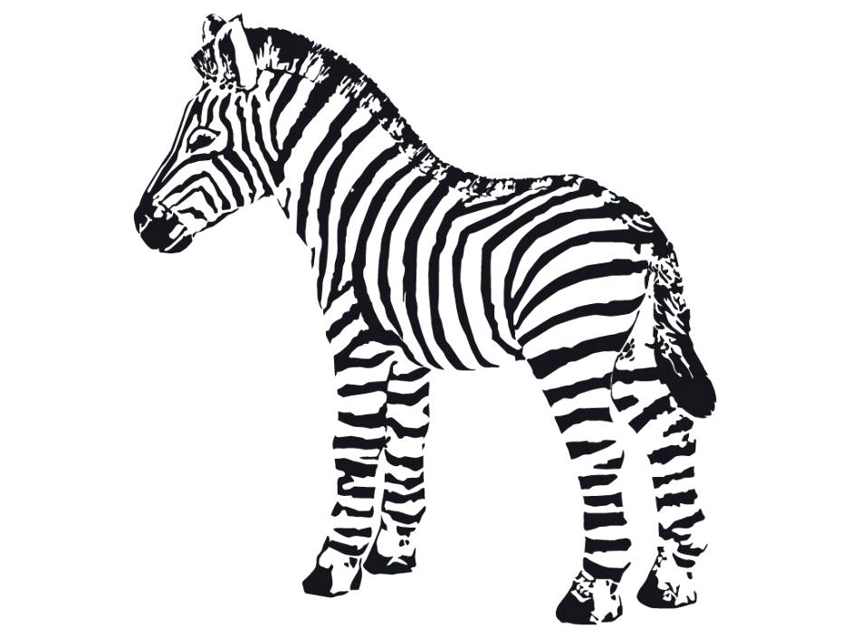 940x705 Beautiful Zebra Coloring Page Image Cute Free Pages Of Zebras
