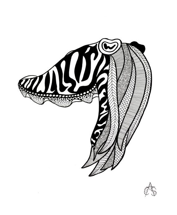 Cuttlefish Drawing