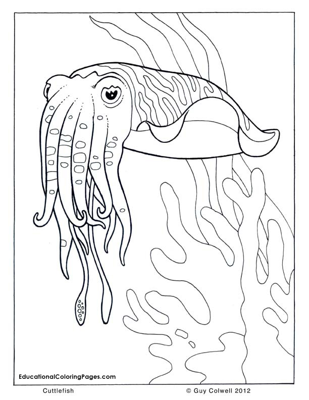 612x792 Not To Mention The Result Coloring Pages For Preschoolers Are