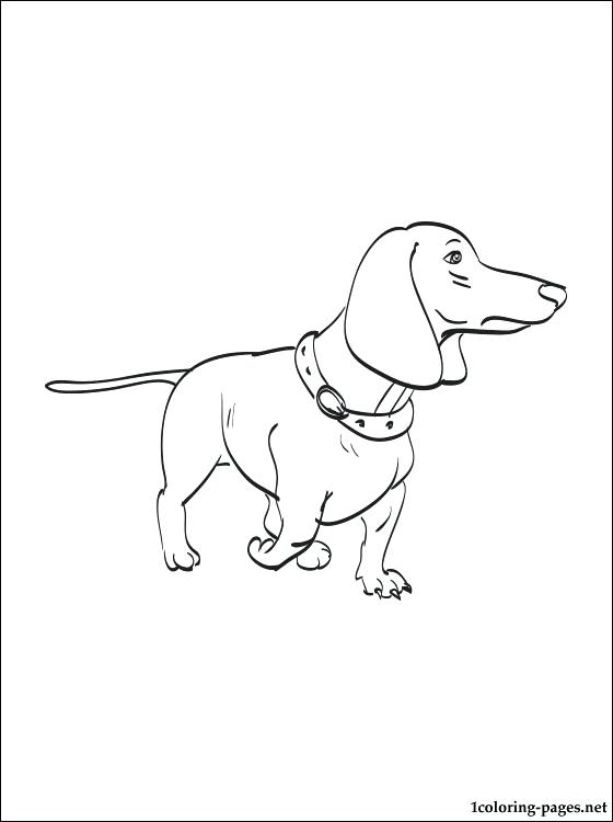 Dachshund Drawing At Getdrawings Com