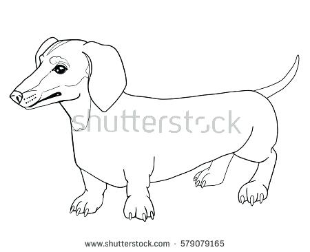 450x366 Dachshund Animal Coloring Pages Dachshund Dog Outline Animal
