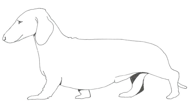 770x430 Dachshund Coloring Pages Dachshund Dog Coloring Page Dachshund