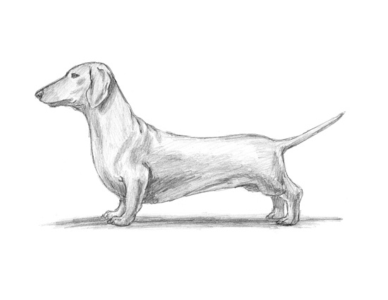 Dachshund Line Drawing At Getdrawings Com