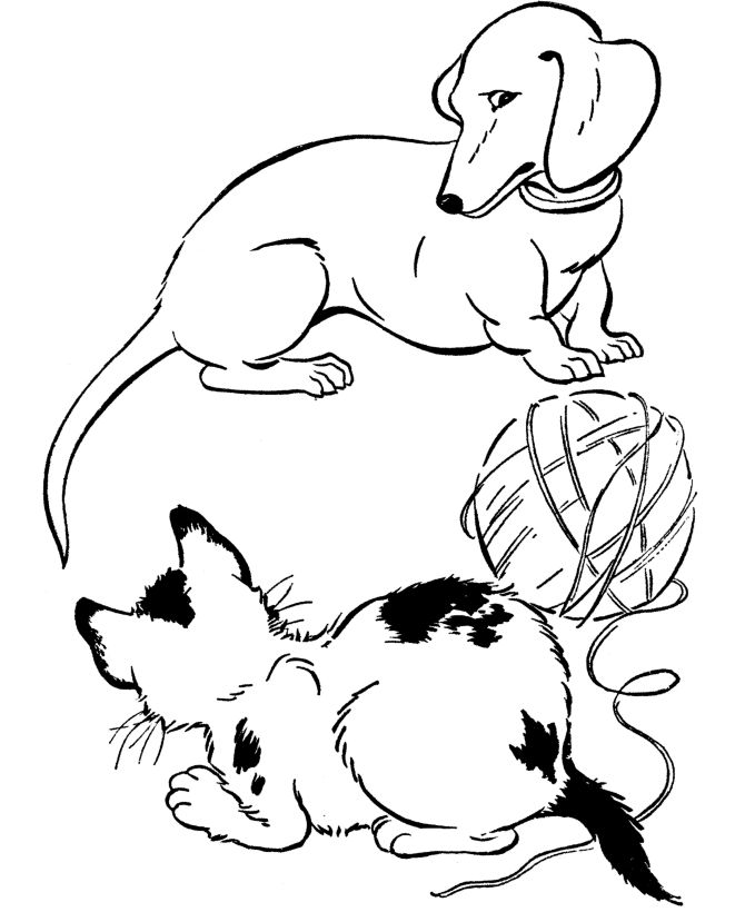 Dachshunds Drawing