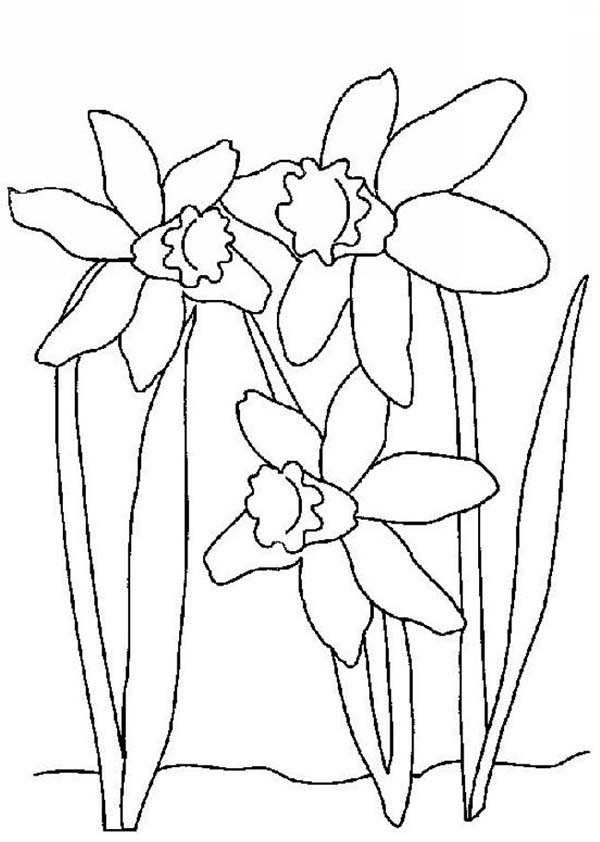 600x842 Daffodil Day Coloring Pages Page