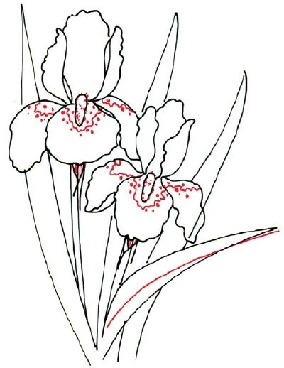 400x518 How To Draw An Iris In 5 Steps Iris, Outlines And Flower