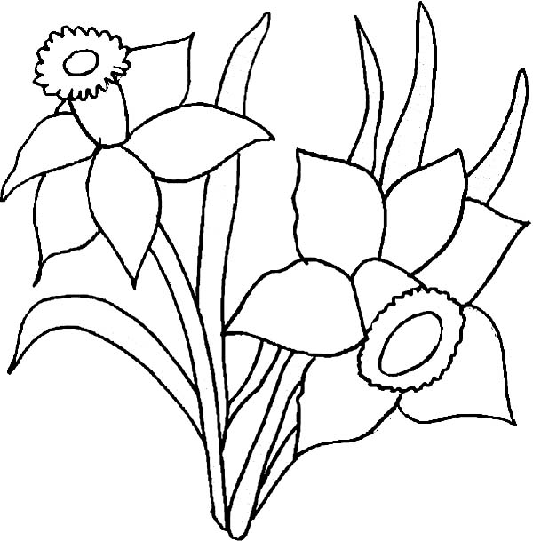 600x609 Daffodil Flower Coloring Page For Kids