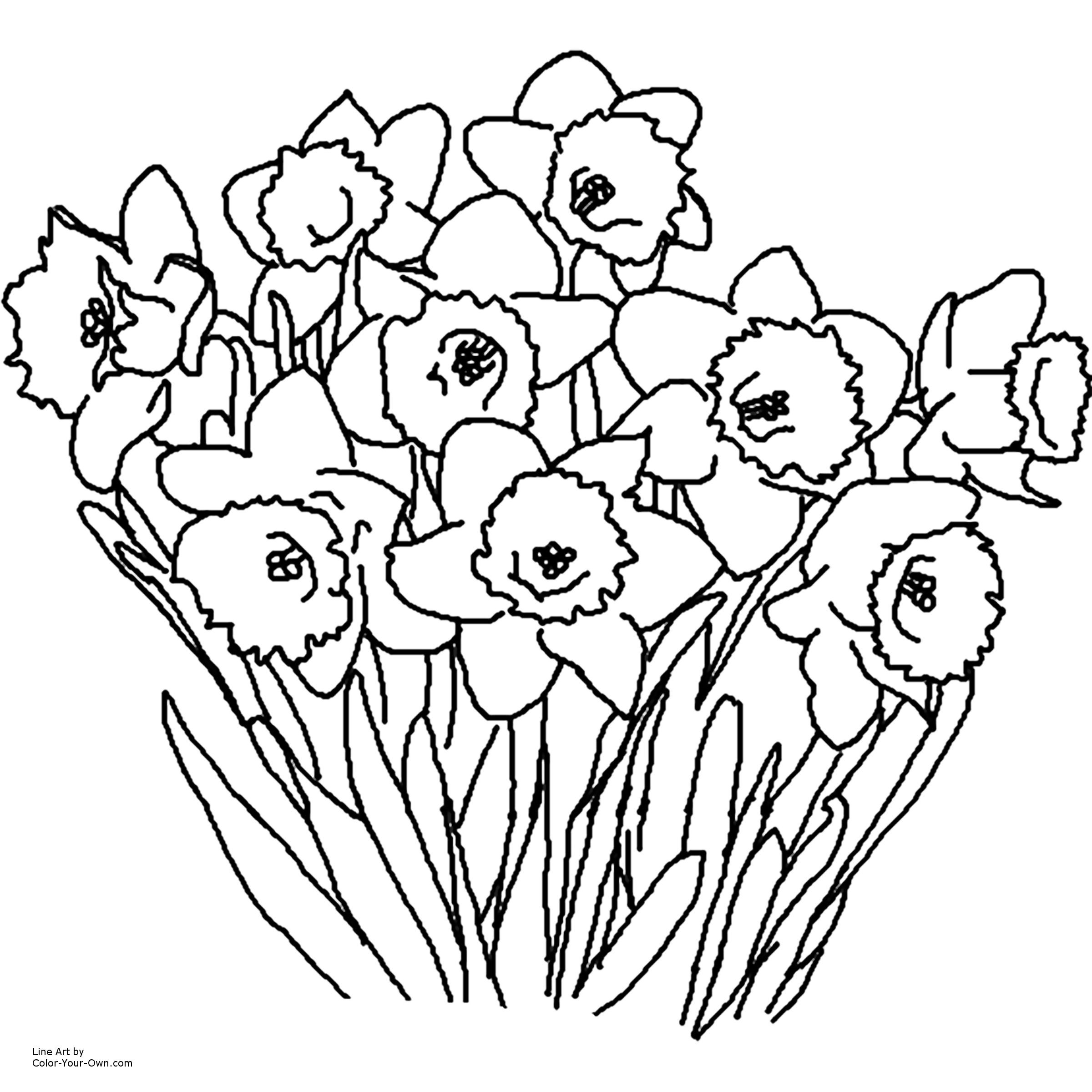 2400x2400 Beautiful Flowers Coloring Pages For Kids Daffodil