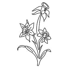 Daffodil Line Drawing