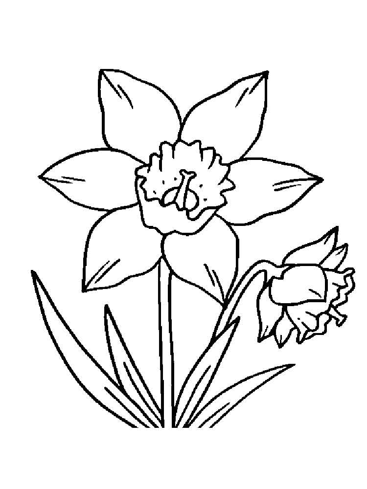 750x1000 Daffodil Coloring Pages Download And Print