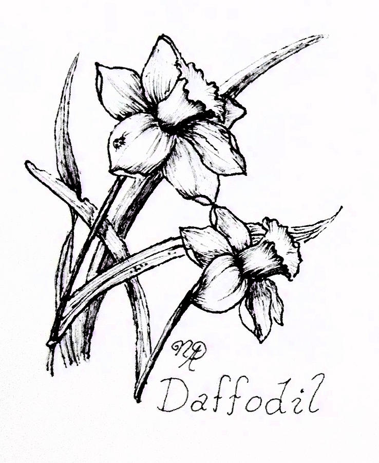 Line Drawing Daffodil : Daffodil line drawing at getdrawings free for