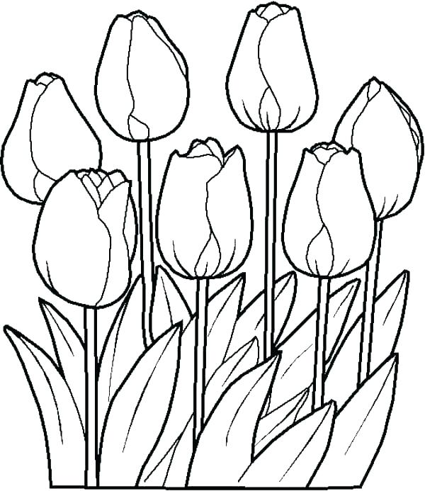 Daffodil Line Drawing at GetDrawings   Free download