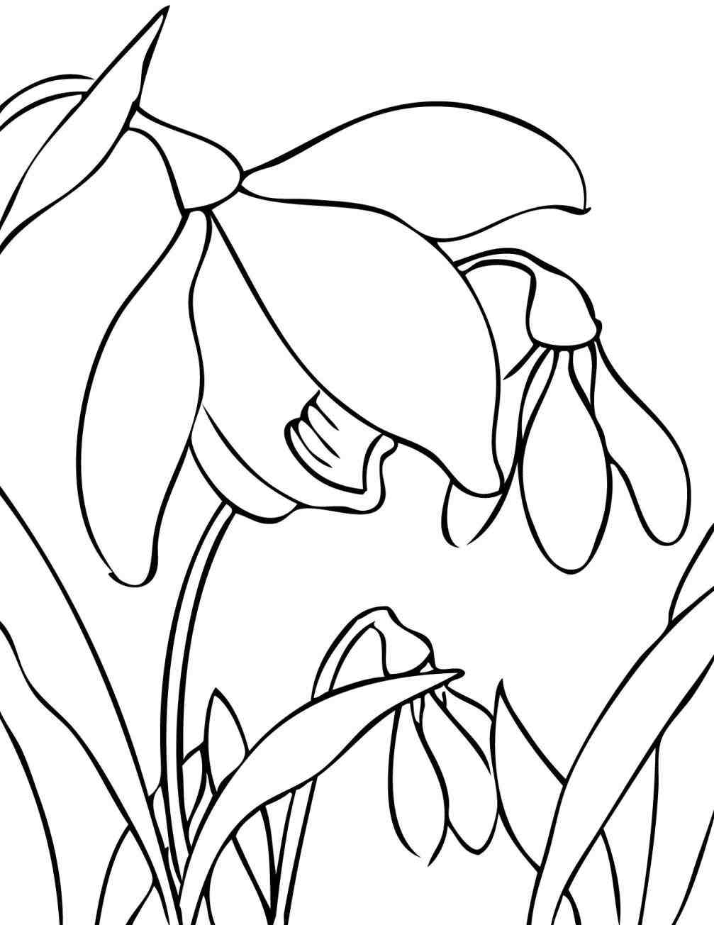 1007x1304 The Images Collection Of Ing For Kids On Season Nice Coloring Page