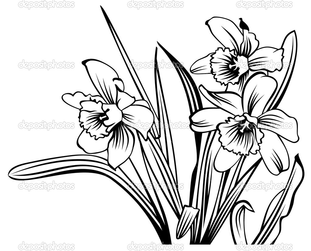 Line Drawing Daffodil : Daffodils line drawing at getdrawings free for