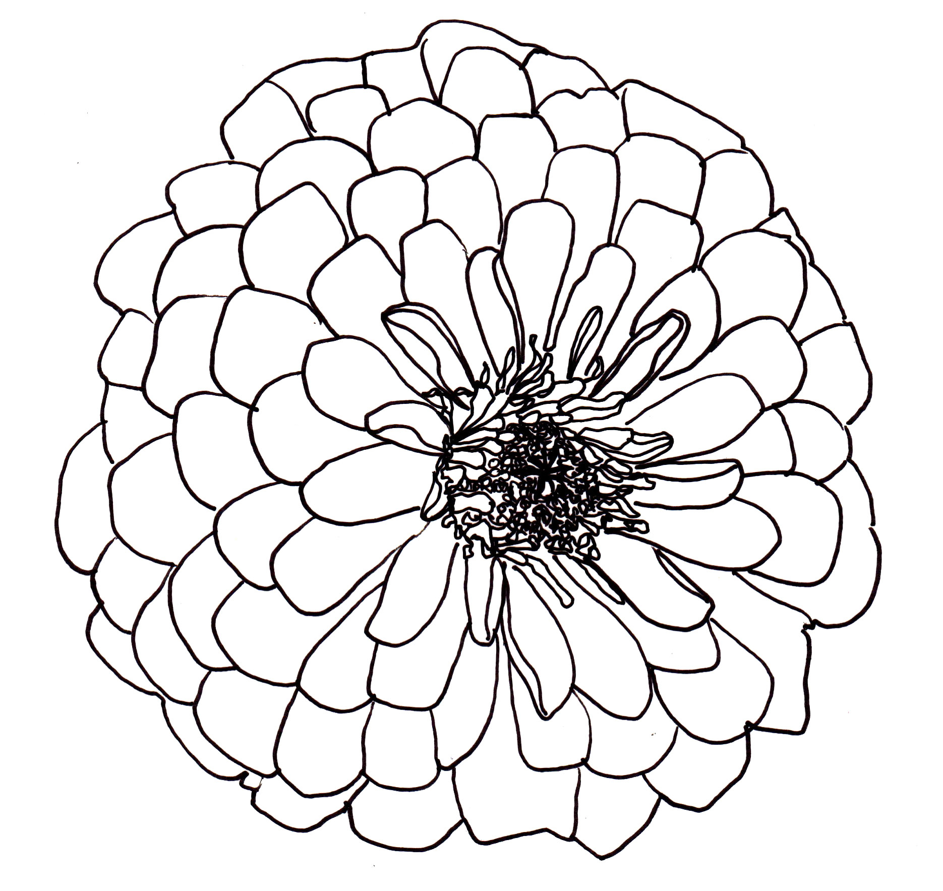 Dahlia drawing at getdrawings free for personal use dahlia 1870x1767 black dahlia flower drawing drawn flower dahlia izmirmasajfo Gallery