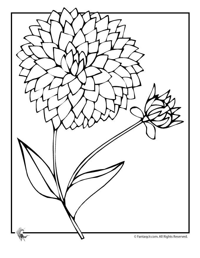 Dahlia Drawing at GetDrawings