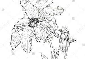 300x210 Dahlia Flower Drawing